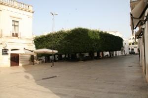 イタリー:樹木の広場